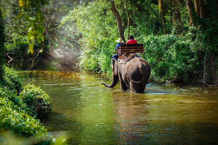 Thailand Elephants.jpg