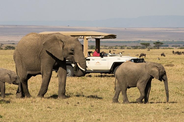 mahali-mzuri-game-vehicle-elephants (Resized).jpg