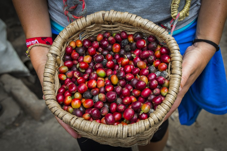 Image 2 - Colombia International Coffee Day (Cropped).jpg