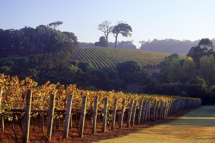 Cape-Lodge_Margaret-River_Vineyards (Resized).jpg