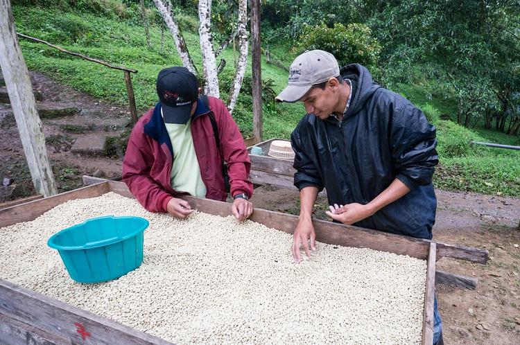 Image 1 - Nicaragua International Coffee Day (Cropped).jpg